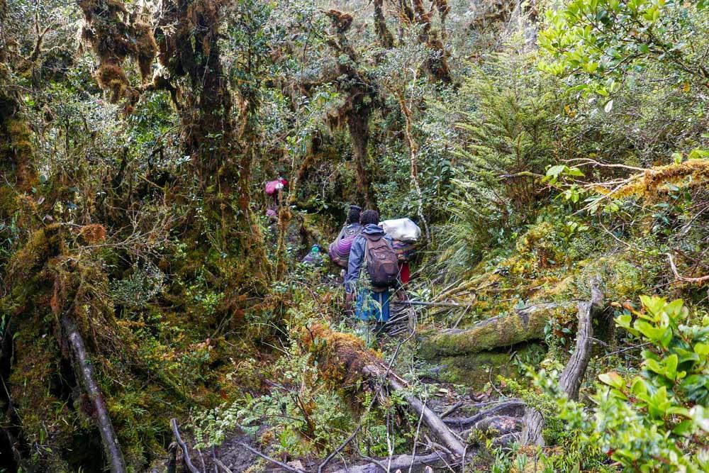 dichter Wald Menschen mit Gepäck Rückenansicht