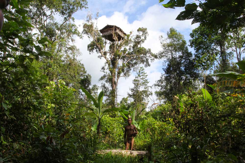 A Korowai man standing in front of tree house